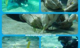 Este lunes se llevó  a cabo la primera plantación del Proyecto de Recuperación de Sebadales de la Playa de Las Canteras