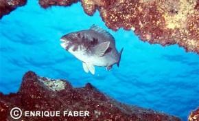 029-Enrique Faber