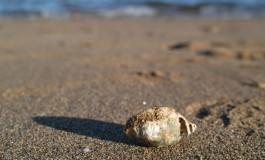 Como en el transcurrir de la vida, la mar nos obsequia con pequeños y frágiles tesoros irrepetibles.