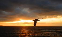 A soñar canario ¡¡¡, que no te corten las alas. Feliz Día de Canarias para tod@s.