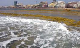 A marea vacía las olas mueren sobre el arrecife.