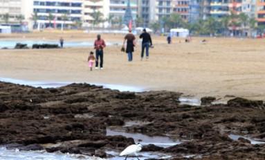 Disfrute de playa. Buena temperatura.