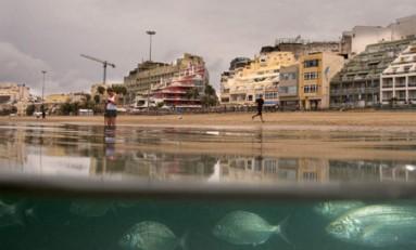 Las salemas y los sargos en un domingo lluvioso y sereno. Foto: Tato Goncalves.