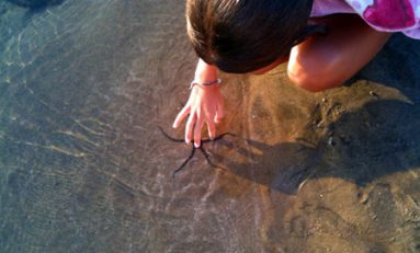 Tratemos con amor a los seres vivos que comparten con nosotros la playa de Las Canteras.