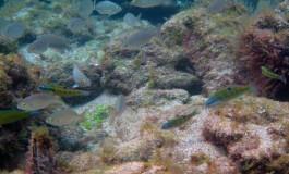 Gueldes y panchonas nadan entre un hermoso abanico. Cuidemos nuestros charcos ¡¡