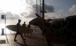 A la vaca le gusta el surfero.