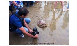 Este jueves hubo una suelta de tortugas. La foto es de Efraín Castellano.