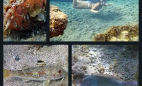 La vida submarina de Las Canteras según Valentín Ruiz