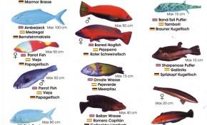 Colección-Identificador de fauna marina V
