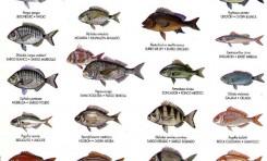 Identificador de nuestros peces 2