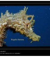 Entrevista a Lucia Molina responsable del proyecto para la recuperación del caballito de mar en nuestras costas