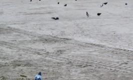 Las palomas invaden Las Canteras.