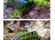 La biodiversidad de la Bahía de El Confital: Guelde