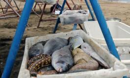 Pescado de barquilllooooo ¡ Los pocos pescadores profesionales que quedan en la Bahía de El Confital quieren vender su pesca en la orilla de Las Canteras.