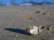 La caracola y el mar.