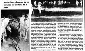 Noticias históricas: Ballenas varadas en Las Canteras