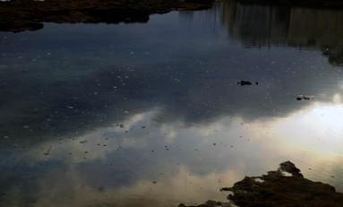 La vida de un charco de la playa de Las Canteras. 1ª parte
