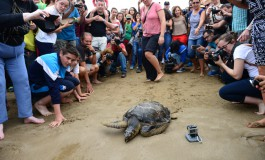 Este jueves, suelta de tortugas en Las Canteras por el Día Mundial de Los Océanos
