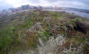 Un paseo en la marea más baja del año