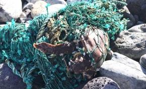 Se rescata una tortuga atrapada por una red de pesca en la zona de El Lloret