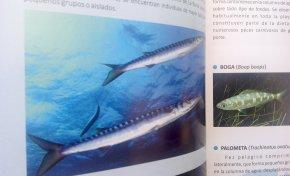 Se publica el libro Vida Submarina de la playa de Las Canteras