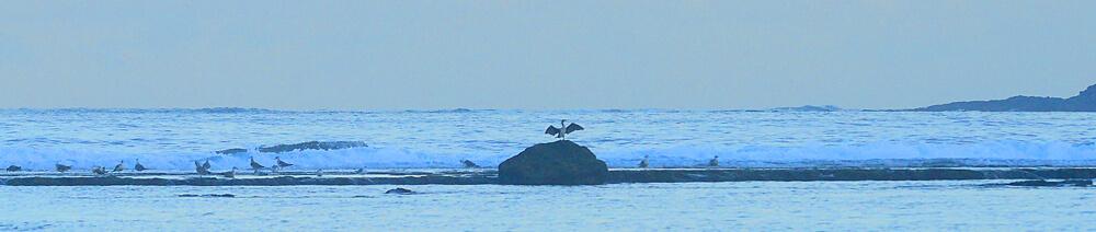 El cormorán seca sus alas en la Barra Grande
