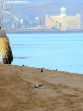 El desnivel de la playa