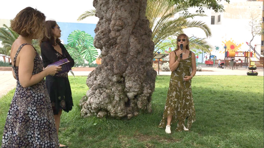 Un recital de poesía rodea al ficus centenario del Parque Pino Apolinario