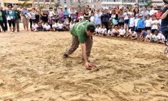 Dos tortugas boba vuelven al mar en Las Canteras con motivo del Día Mundial de los Océanos