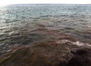 """Se estudian """"manchas marrones"""" aparecidas en la orilla de Las Canteras"""