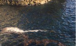 Posible manchón de microalgas en la bahía de El Confital