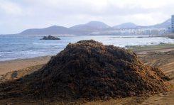 1000 metros cúbicos de arena se extraen de la playa cada año envuelta en la seba