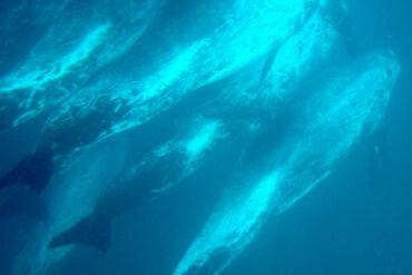 Aspectos ecológicos en el área oceánica de la Bahía de El Confital