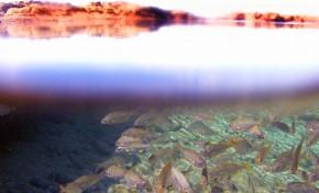 El calentamiento de los mares podría reducir un 17% la biomasa de especies marinas a nivel global a finales de siglo