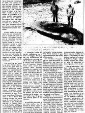 Noticias históricas. Ballenas varadas en Las Canteras (2)