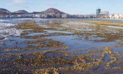Descripción del arco norte de la Playa de Las Canteras (LIBRO BLANCO: Las Canteras y Bahía del Confital)