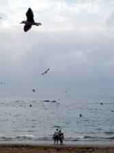 """Cuentos a la orilla del mar """"El regalo del mar"""""""