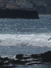 Esta tarde saldrán buenas olas en el Confi