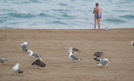 Las aves como los humanos disfrutan de las mañanitas playeras