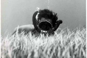 Las praderas de fanerógamas marinas ( Sebadales) en Canarias y su diversidad- 3ª parte