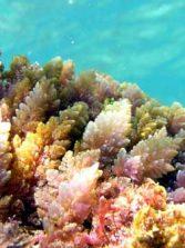 La Poesía salva el Mar (V)