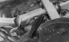 La pesca artesanal en la Bahía del Confital. Antecedentes históricos hispánicos (LIBRO BLANCO: Las Canteras y Bahía del Confital)