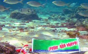 """La maravillosa vida que esconden los fondos de la Playa de Las Canteras """" Navidad desde el fondo de Las Canteras"""""""