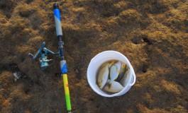 Pesca de panchonas.