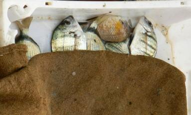 Un proyecto desarrollará alimentos marinos sostenibles