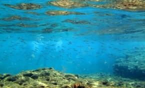 Un acuario llamado El Charcón