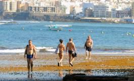 La orilla está  llena de seba arrancada del fondo por la fuerza del mar del fin de semana pasado.