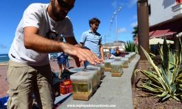 Se plantan las primeras 150 plántulas del Proyecto de Recuperación de Sebadales de Las Canteras.