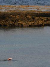 Investigadores del CSIC explican las vías de transmisión del coronavirus en playas y piscinas