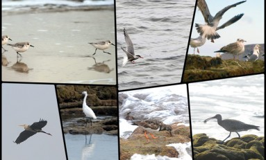 Guía de las aves de la Bahía de El Confital